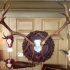 'The Heritage Stag' with antlers