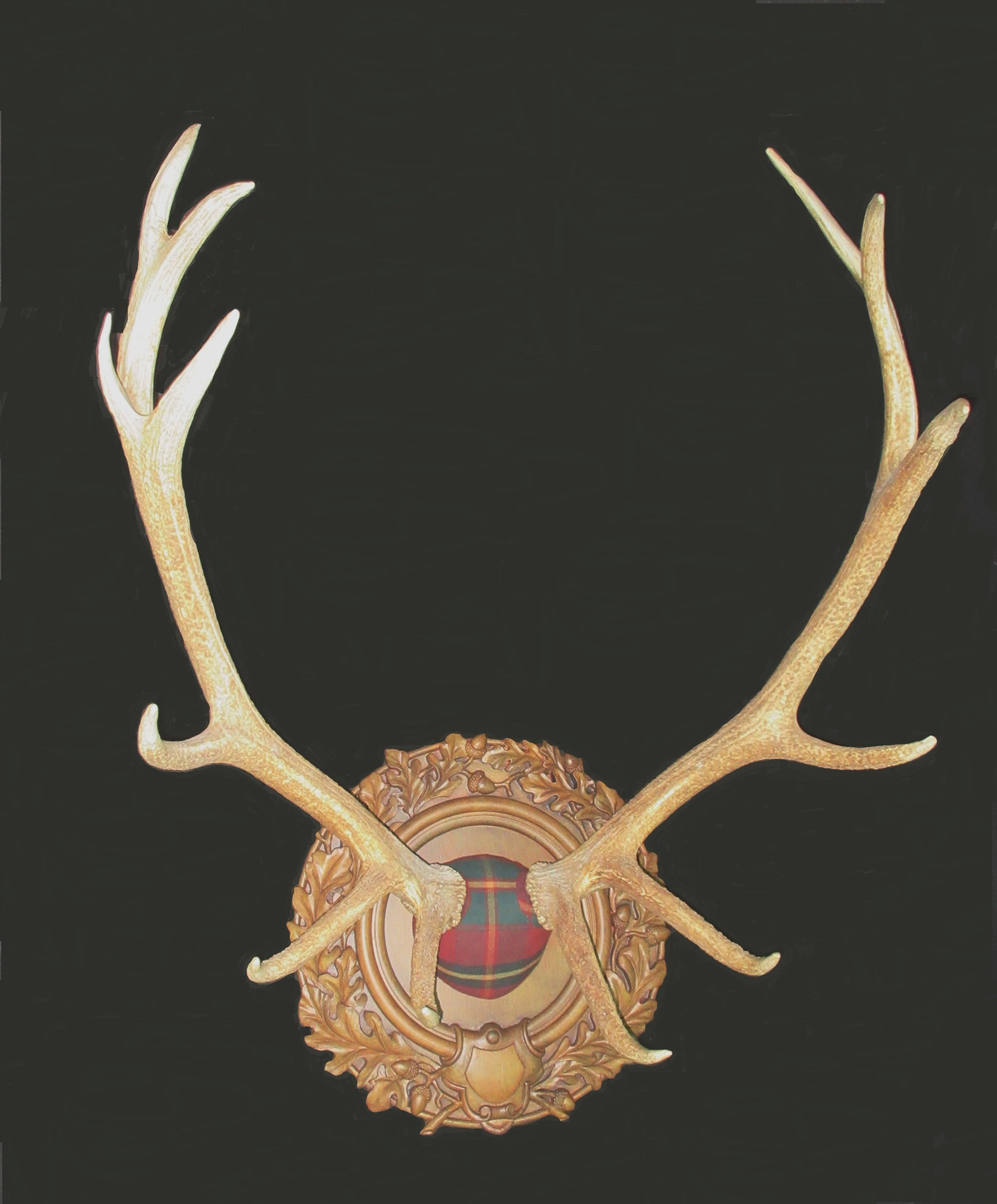 Tartan Elk Antlers