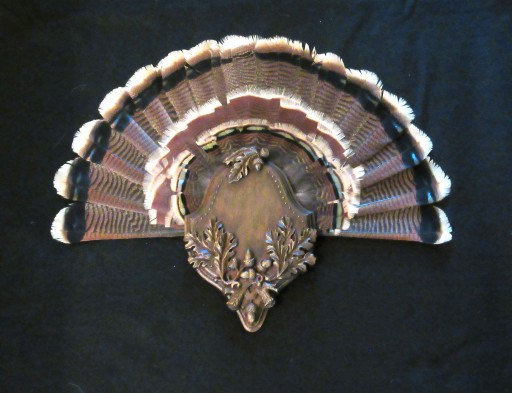 Elegant Turkey Fan Panel by Heritage Game Mounts