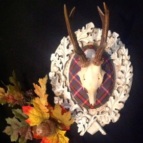 Tartan Roe Deer on Legacy Panel by Heritage Game Mounts.
