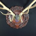 Tartan Stag by Heritage Game Mounts