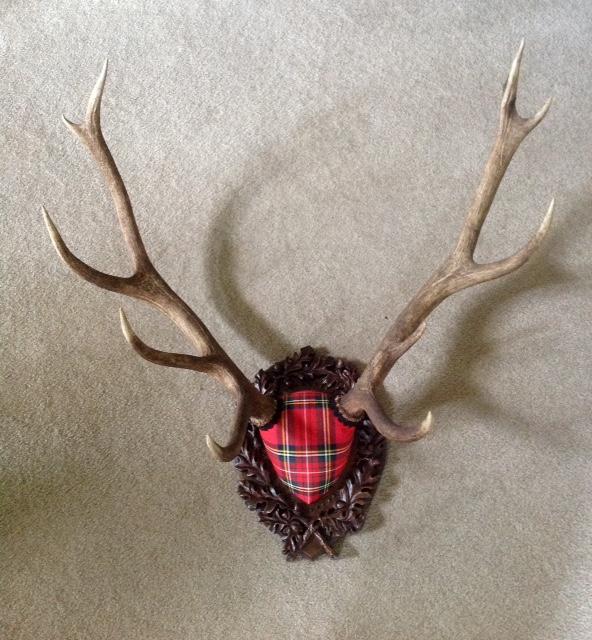 taxidermy mount - Tartan Stag on Oak Leaf Panel