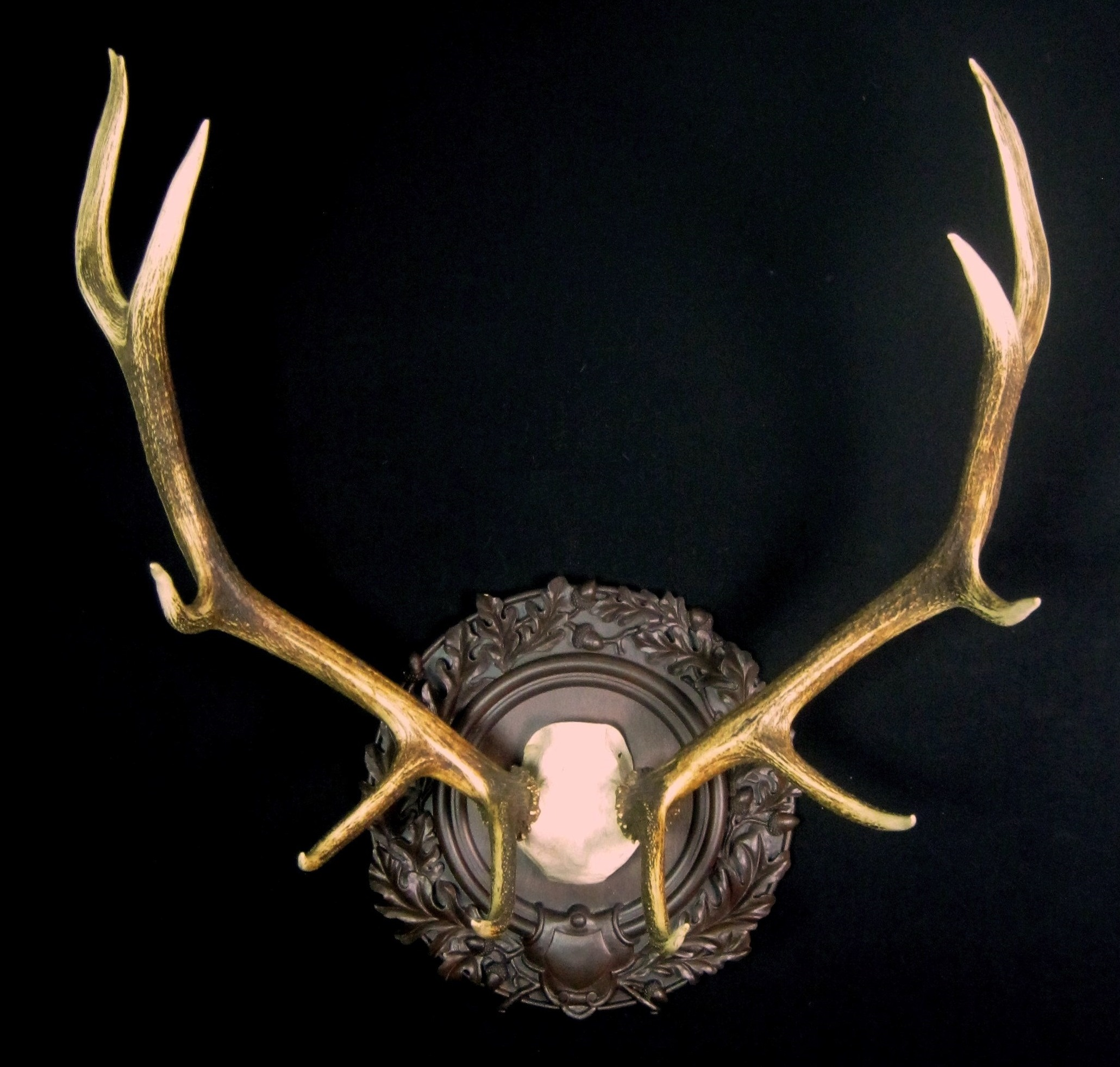 Beautiful elk antlers mounted in classic old world style, surrounded by ornate oak leaves and acorns.