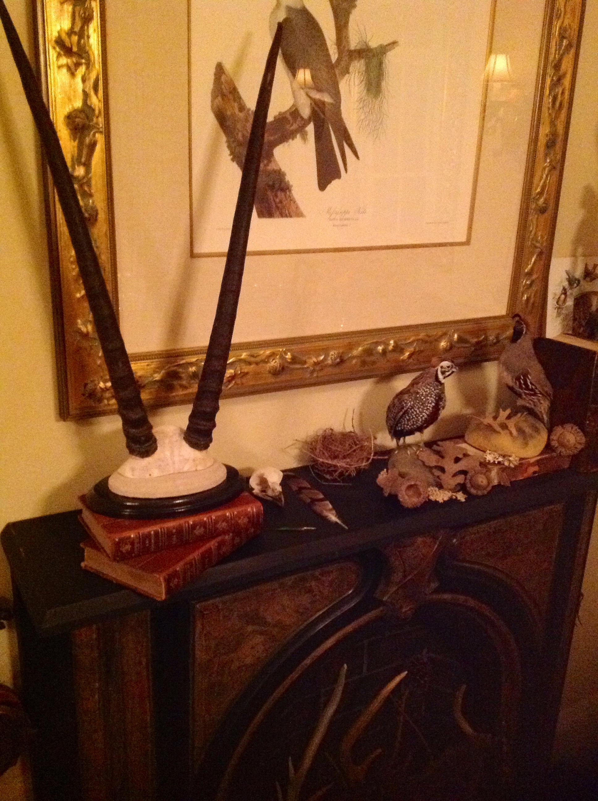 taxidermy mount - gemsbok