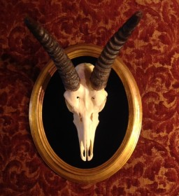 one of a kind gold cameo Springbok skull. Displayed on black velvet and displayed in a vintage Italian gold leaf frame.