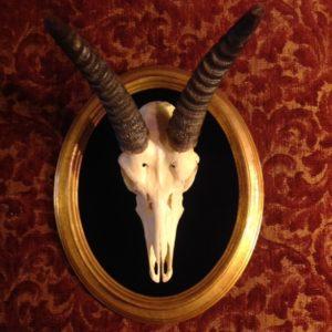 gpld cameo springbok mount