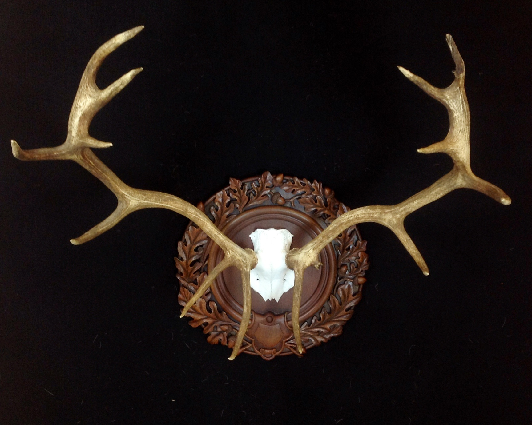 taxidermy mount - stag