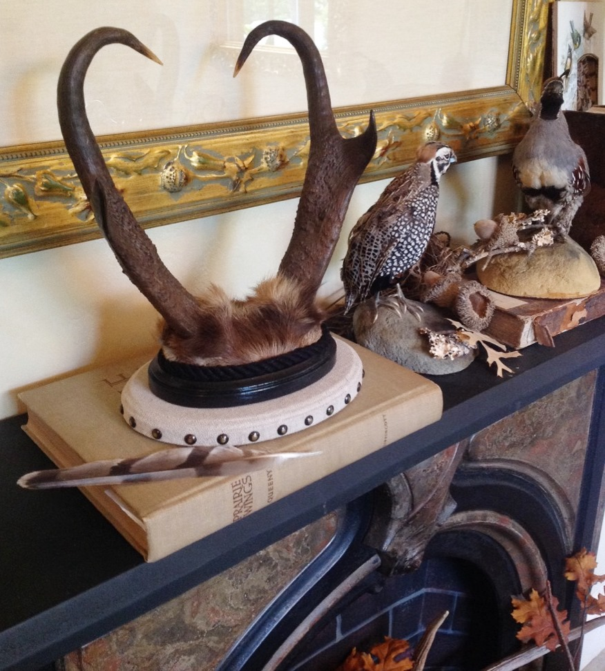 table top mounted pronghorn antelope