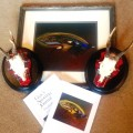 Highland Fling! Royal Stewart Roe Deer and Scottish Classic Salmon Fly print.
