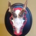 Royal Roe deer set on Royal Stewart tartan fabric.