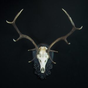 elegant European stag mounted on Black Forest Style Panel by Heritage Game Mounts