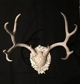 Patina- Sun bleached mule deer antlers on Legacy by Heritage Game Mounts